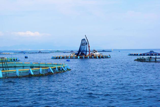 La acuicultura en España: sostenible, sana, segura y sabrosa