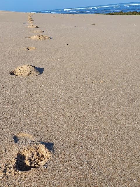 المشي على الرمال ( Walking on sand )