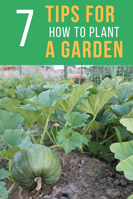 Easy steps to help you learn how to plant a garden successfully for your best crop ever.