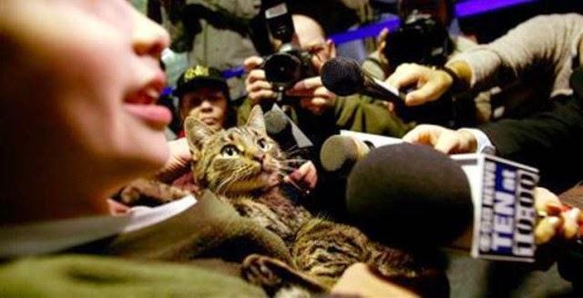 Mascotas que volvieron a casa desde distancias increíbles.