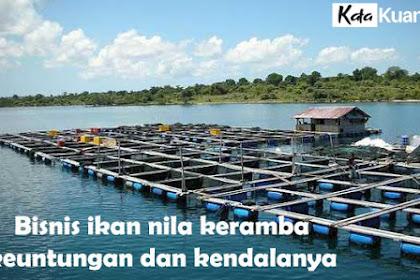 Bisnis ikan nila keramba keuntungan dan kendalanya