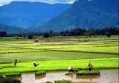 Pencitraan Web E-Forum Petani dan E-Komunitas Pertanian Online Indonesia