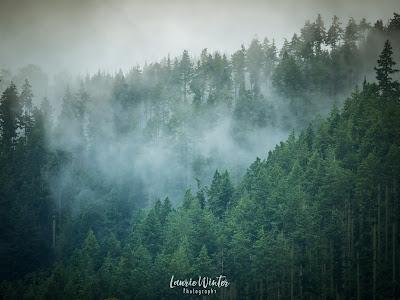 New Zealand, NZ, Rotorua, Lake Tarawera, Mist, Forest