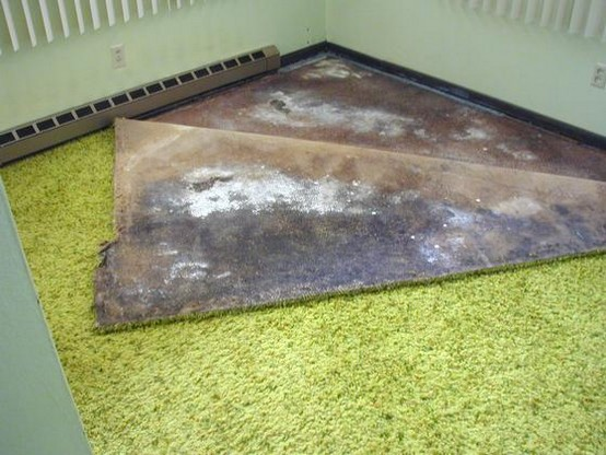 How To Get Mold Out Of Carpet White Mold In Basement
