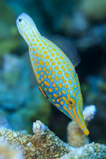 Coral reef fish 16