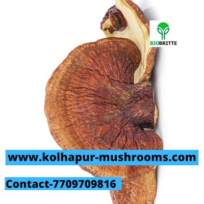 Scope Of Ganoderma Mushroom