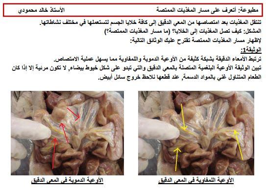 مذكرة نقل المغذيات علوم طبيعية للسنة الرابعة متوسط محمودي خالد