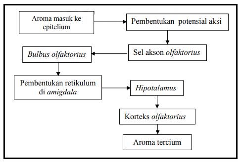 Fisiologi Aromaterapi