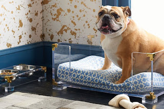 lesões ortopédicas em cães