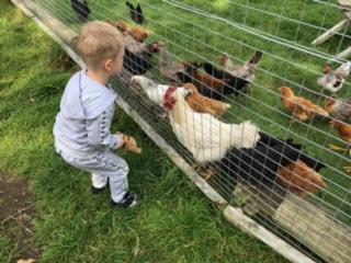 Bill Quay Farm | A Free Day Out in Gateshead