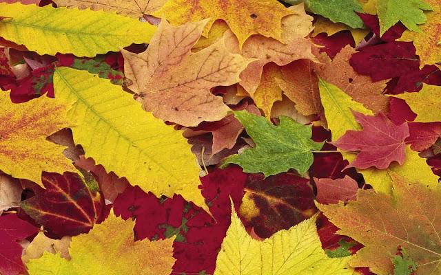 Rode, gele en bruine herfstbladeren