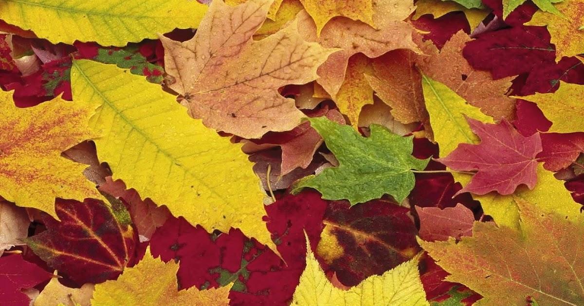 Fall Leaves Wallpaper Windows 7 Gekleurde Herfstbladeren Wallpaper Mooie Leuke