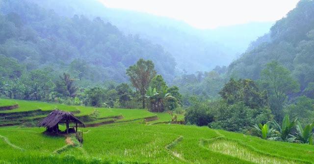 Desa Kayupuring Pekalongan