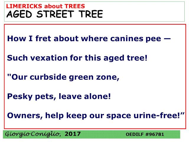 limerick; tree; elderly; Giorgio Coniglio