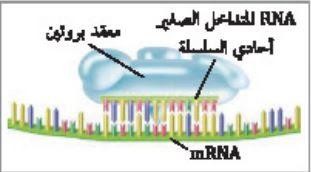 تداخل RNA