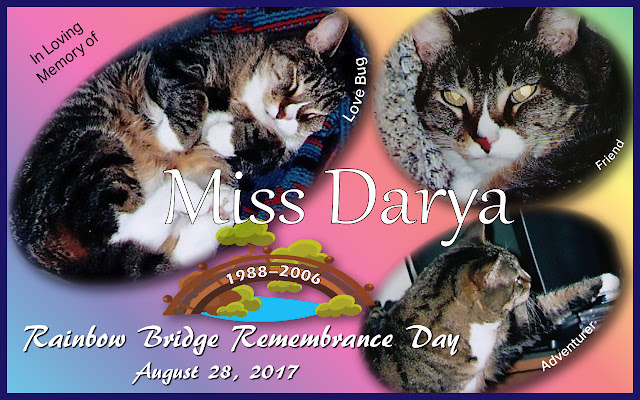 Remembering Miss Darya on Rainbow Bridge Remembrance Day