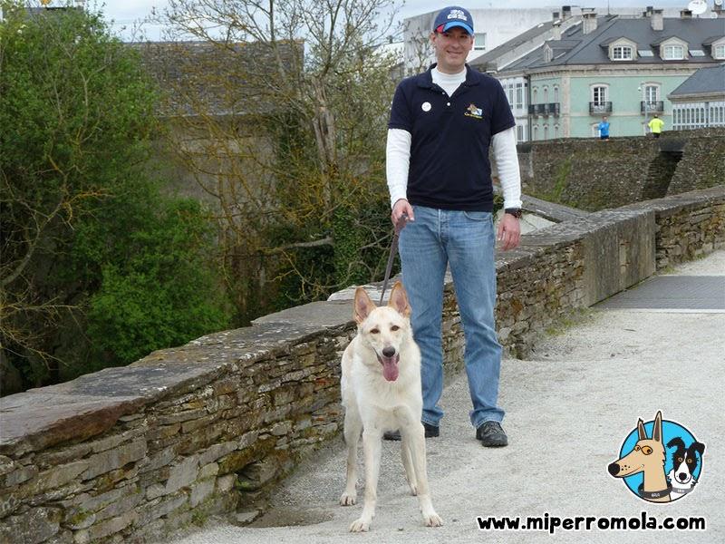 Can de Palleiro participando en la andaina en la Muralla de Lugo