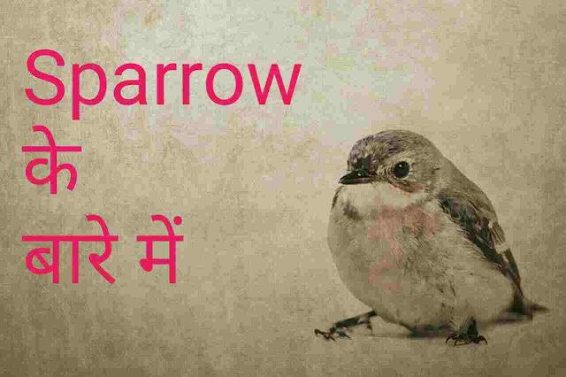 information about sparrow in Hindi - चिड़िया के बारे में जानकारी हिंदी में