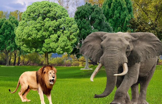 Sher , oont , Camel Aur Gidad ki kahani  -