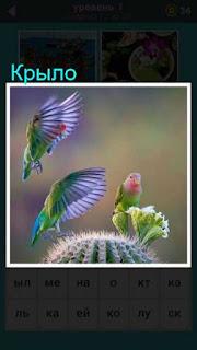птицы машут крыльями в воздухе в игре 66 слов 1 уровень