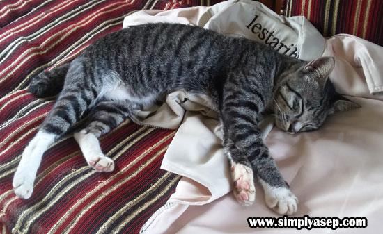 NYAMAN : Kucing, sebagai salah satu hewan kesayangan manusia ini juga memerlukan situasi yang nyaman saat ditinggal di rumah. Foto Asep Haryono