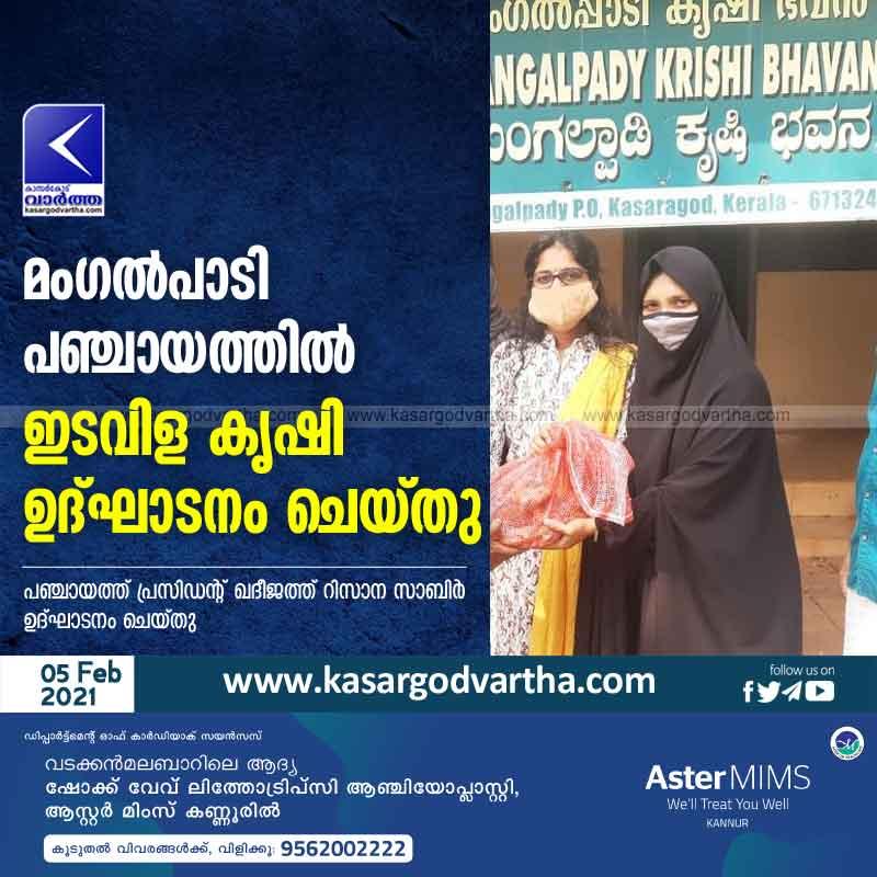 Kerala, Kasaragod, News, Intercropping, Panchayath, Intercropping was inaugurated in Mangalpadi panchayath.