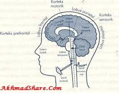 Materi Tentang Hormon Endorfin PDF PPT DOC [Lengkap]