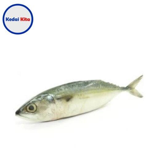 Ikan Kembung Kuring 500 Gram