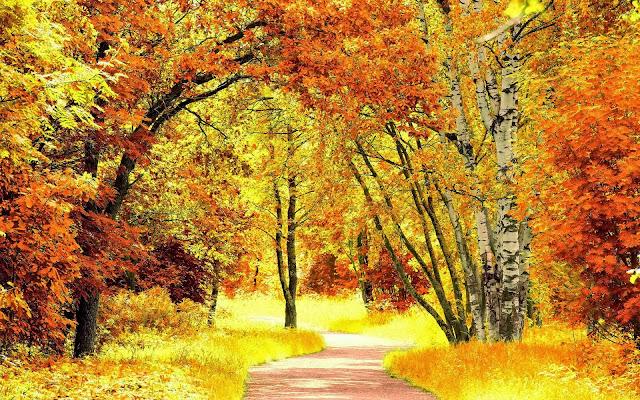 Bomen met herfstbladeren
