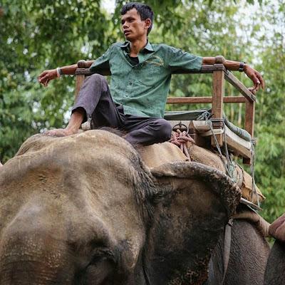 Mahout y elefante descansando en Chitwan