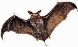 hewan penyebar virus EBOLA