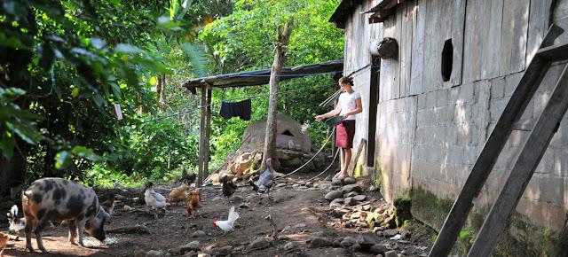 Una agricultora alimenta a sus animales en una granja familiar en NicaraguaFoto de archivo: FAO
