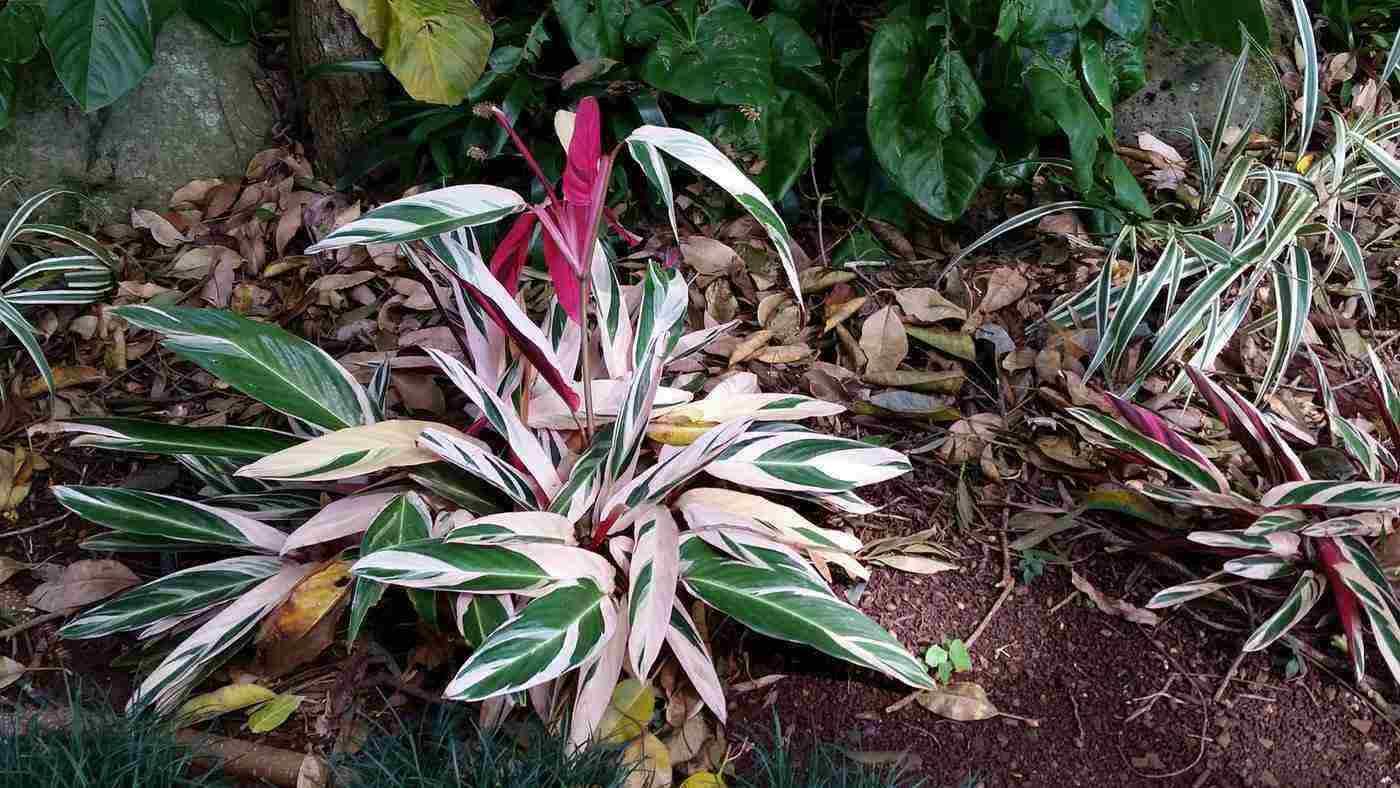plant in wahiawa botanical garden - travel guide to wahiawa, hawaii