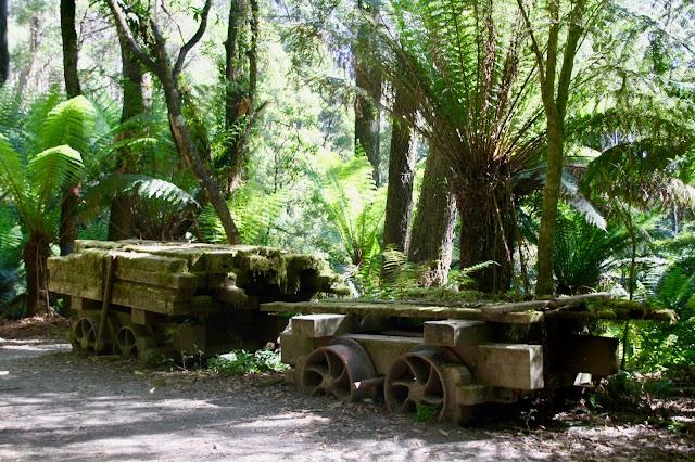 sawmill relics in rainforest