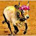 தமிழகத்தில் ஜல்லிக்கட்டு நடத்துவதற்கு ஏற்ப மிருகவதை தடுப்புச் சட்டத்தில் திருத்தம் செய்வதற்கான சட்டத்திருத்த மசோதா ஒருமனதாக நிறைவேறியது