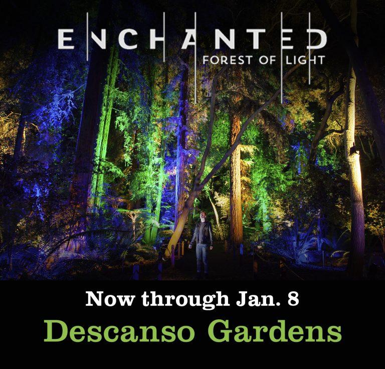 Average Socialite Enchanted Forest Of Light La