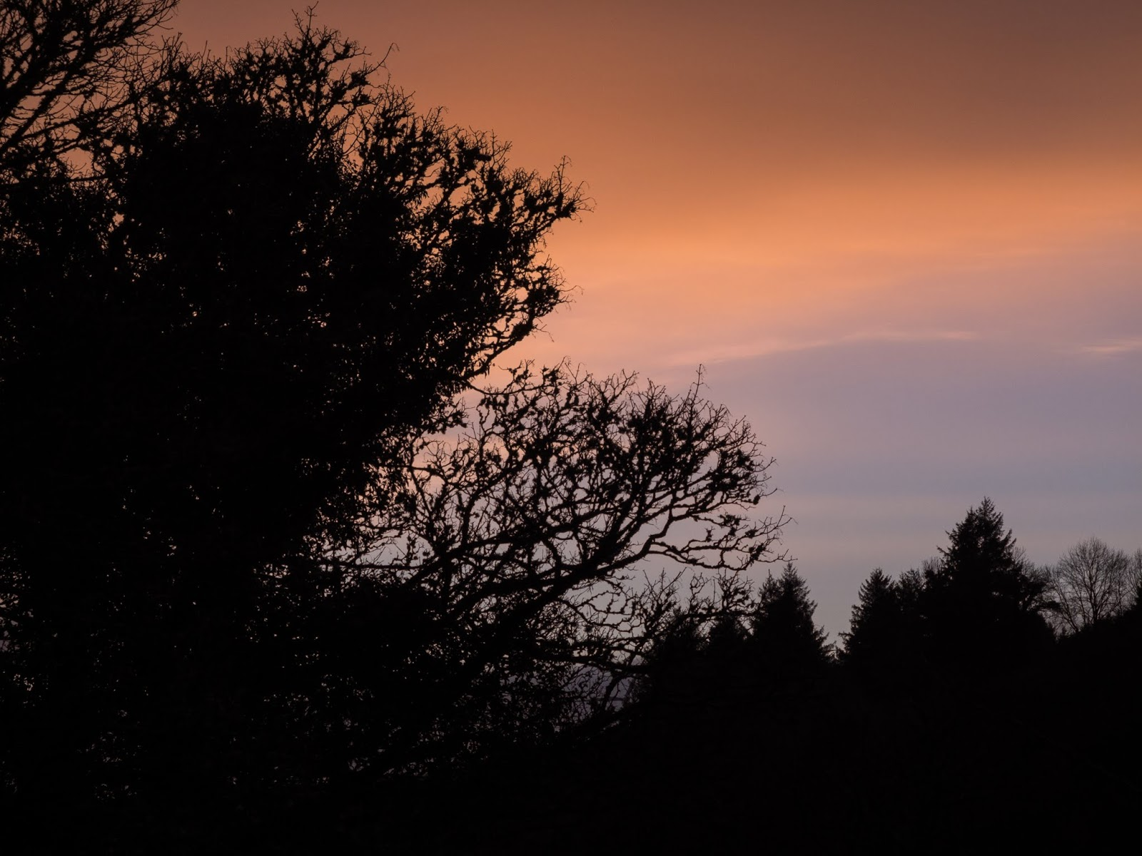 Orange sunset clouds over conifers and bare deciduous tree branches.