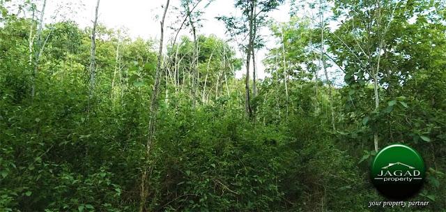Tanah Luas Area Wisata Imogiri Bantul