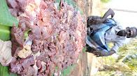 ஆயிரம் கோழி ஈரல் மூலம் தயாரிக்க பட்ட ஈரல் வறுவல் கிராமத்து சமையல்