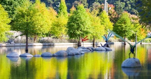台中后里泰安落羽松(羽粼落羽松)有蜻蜓、老車和水池造景,美照拍不停