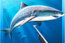 Hunter Underwater Spearfishing MOD APK v1.48 [Unlimited Money]