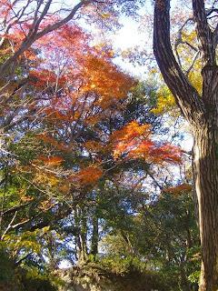 仮粧坂の紅葉