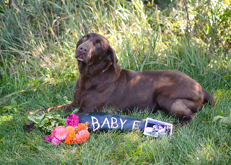 Pregnancy Announcement; Baby E | My Darling Days