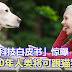 日本「科技白皮书」惊曝:2040年人类将可跟猫狗聊天!
