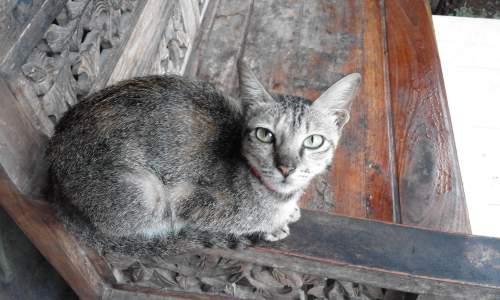Cara Melatih Kucing Menggunakan Toilet Buatan, Agar Tidak Buang Kotoran Sembarangan