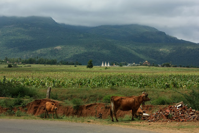 The Buddhist monastery of Dhondeling at the foot of the hills that form BRT tiger reserve, Karnataka