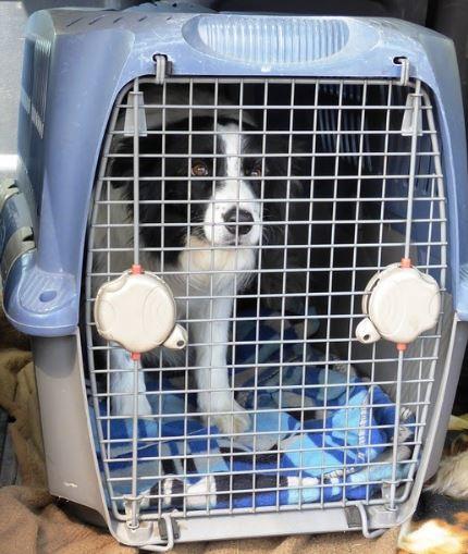 pet inside carrier airline travel