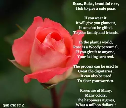 Rose Poems | Rose...... - QUICKFACTS12