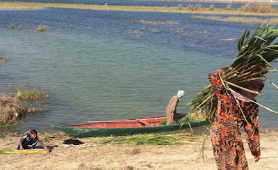 Ecological collapse circumscribes traditional women's work in the Mesopotamian Marshes of Iraq