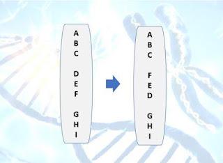 Soal dan Pembahasan Ujian Biologi Tentang Mutasi Genetik